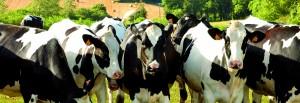 valograin-specialiste-eleveurs-laitiers